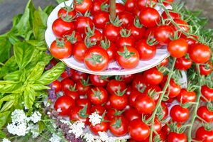 Tomate Philovita